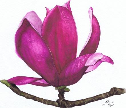 7.  Single Magnolia